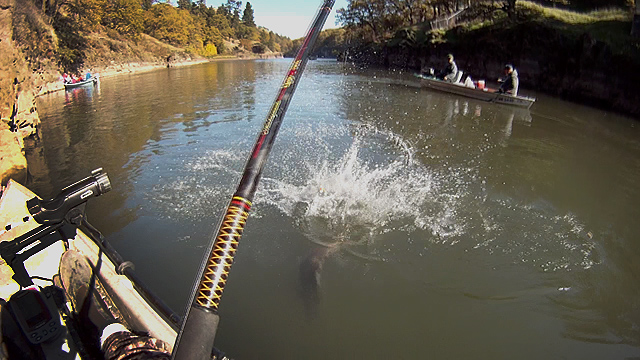 Click HERE for the Kayak Fishing for Salmon in Southwest Washington video