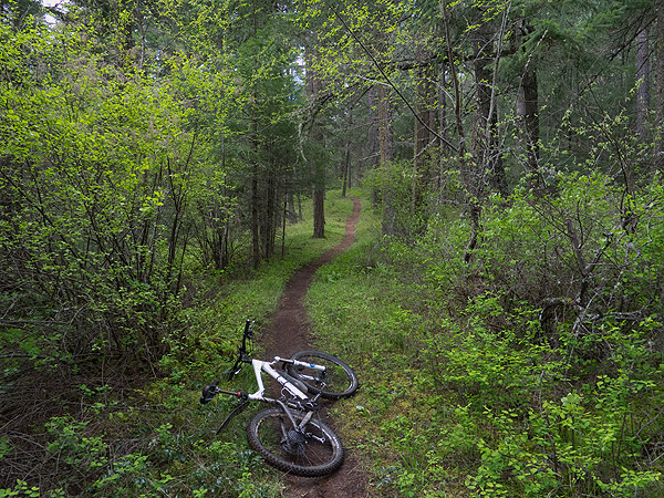Springtime green singletrack in the Pacific Northwest