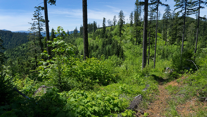 Gifford Pinchot National Forest trail