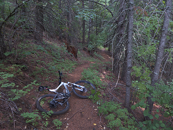 Great singletrack mountain bike riding