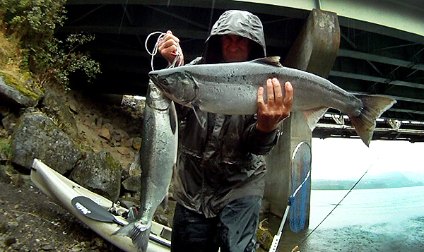 Big chinook salmon caught while kayak fishing on the Columbia River on a rainy fall day