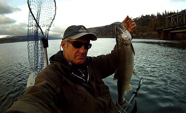 Coho salmon caught while kayak fishing on the Columbia River