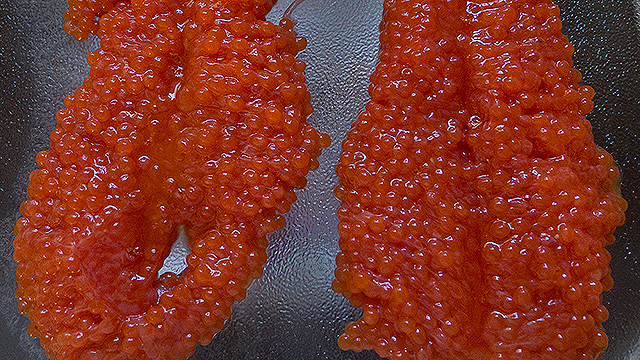 Click HERE to go to the Curing Salmon Eggs web page