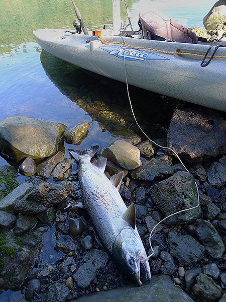 Chinook salmon, kayak fishing on the Columbia River