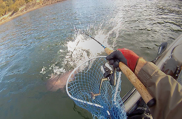 Big coho salmon breaks fishing rod while kayak fishing for salmon on the Columbia River