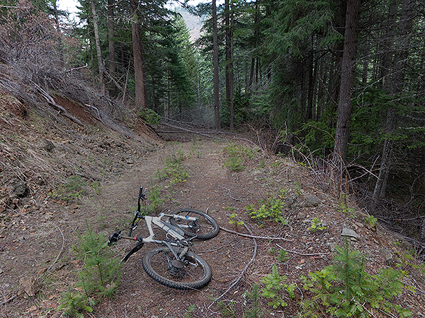 A hidden trail in the Cascade foothills