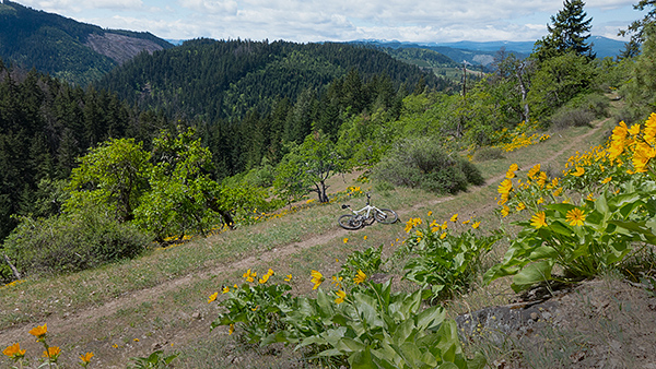 Mountain bike riding in the Cascade Mountain foothills