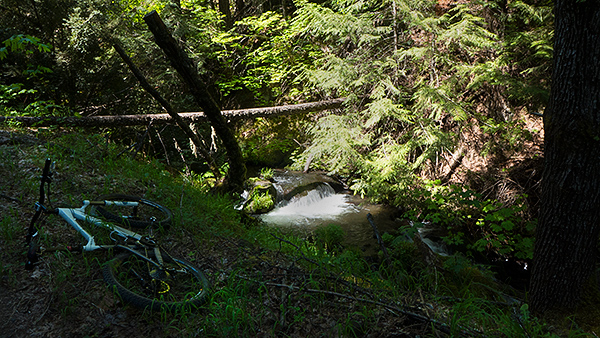 Trailside creek in the Cascade Mountains