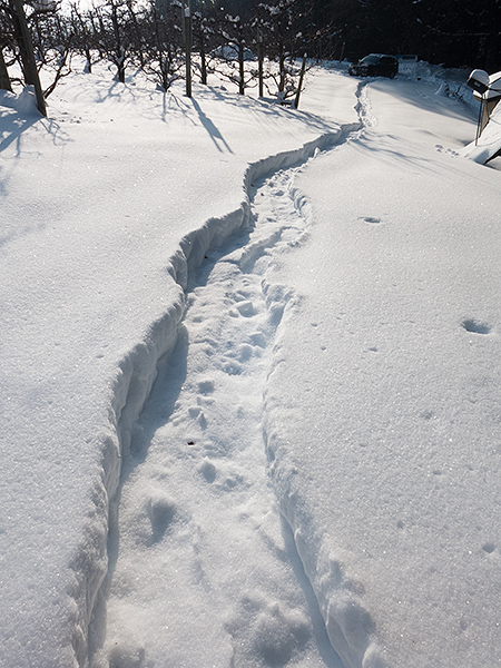 Snowshoe tracks up to WatermanAtWork HQ