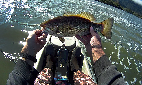 Columbia River smallmouth bass caught while kayak fishing