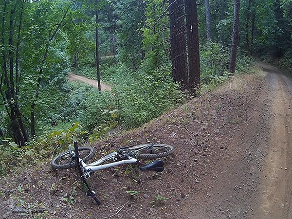 Cycling on SW Washington Forest Service roads