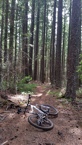 Prime SW Washington singletrack