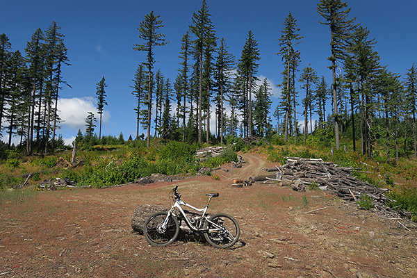 An old logging operation on the mountain bike trail