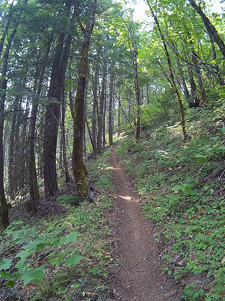 SW Washington singletrack