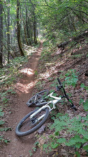Mountain biking on SW Washington singletrack