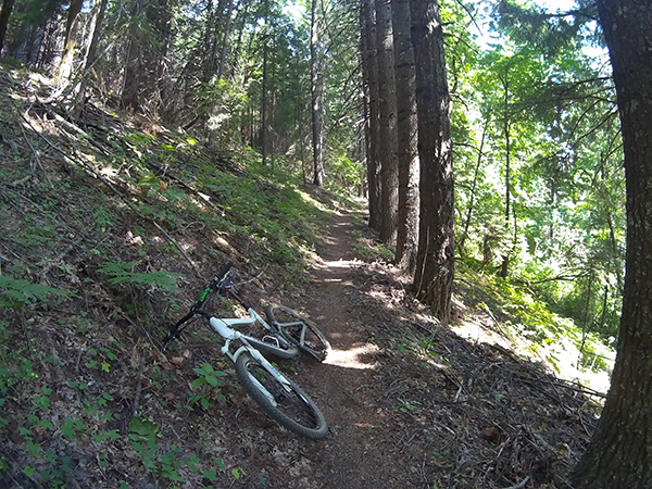 Mountain biking SW Washington singletrack