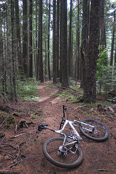 SW Washington singletrack mountain bike trail