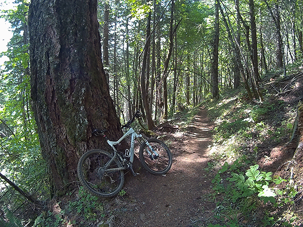 Mountain biking on pristine SW Washington singletrack