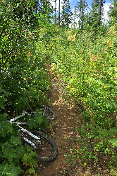 A seldom used singletrack trail