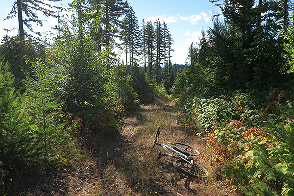 Old logging road in southwest Washington