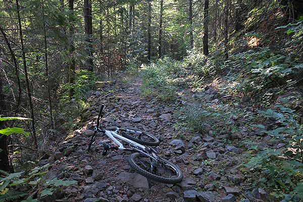 Rocky section of mountain bike trail