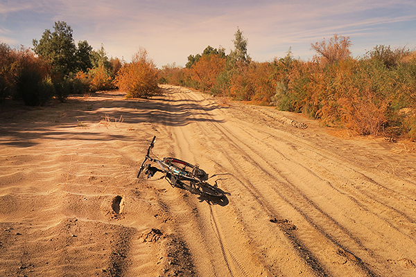 Sandy ORV road becomes rideable for bicycles after desert rain.