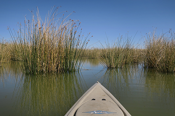 Kayak fishing deep in the reeds on Mittry Lake