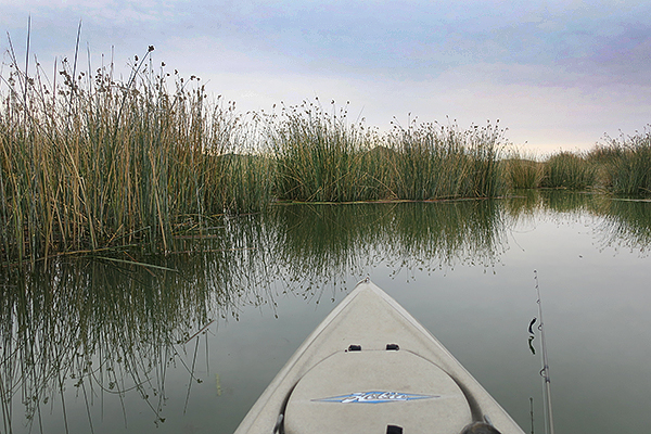 Kayak fishing for largemouth bass in the reeds of Mittry Lake.