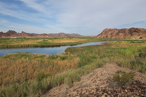 Taylor Lake on the Colorado River in Picacho State Park in southeast California
