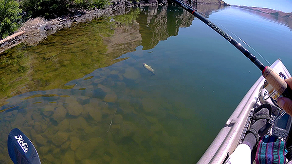 Kayak fishing for smallmouth bass in Eastern WA with watermanatwork.com