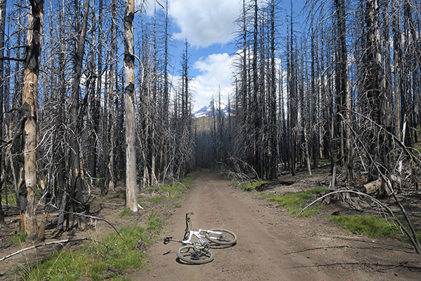 Mt Adams forest burned by wildfire