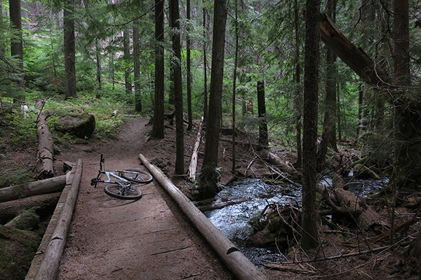 Mountain biking in the deep, dark Cascade Mountains