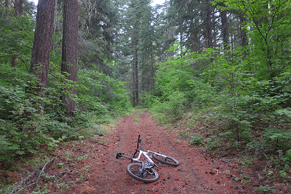 Mountain biking in Gifford Pinchot National Forest