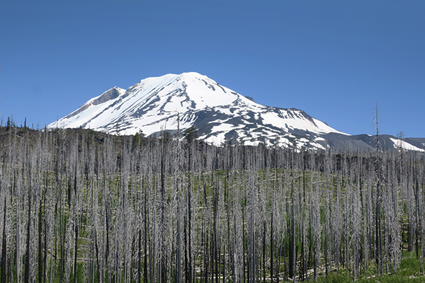 Mt Adams and Aiken Lava Bed in central Washington