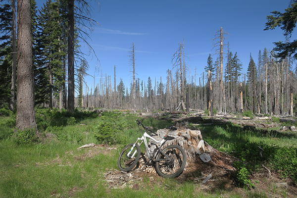 Wildfire burn area in Gifford Pinchot National Forest