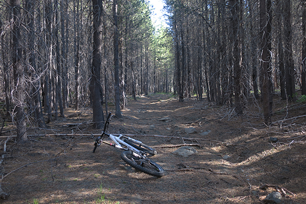 Old logging road in the Cascade Mountains for mountain biking adventure
