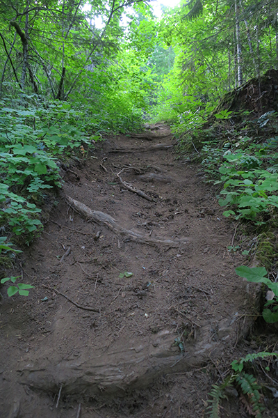 Steep Cascade Mountain singletrack with tree roots
