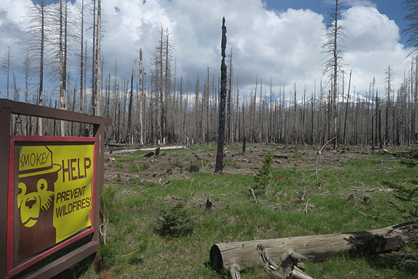 Wildfire burn area in Gifford Pinchot National Forest near Mt. Adams