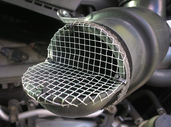 Rodent proof screen cover for engine air intake vent