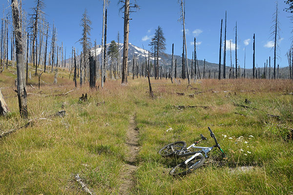 Mountain biking through an alpine meadow near Mt Adams