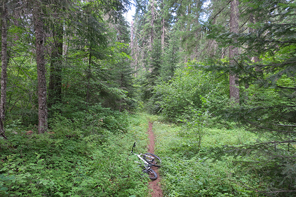 Mountain biking Cascade Mountain trail with perfect riding conditions
