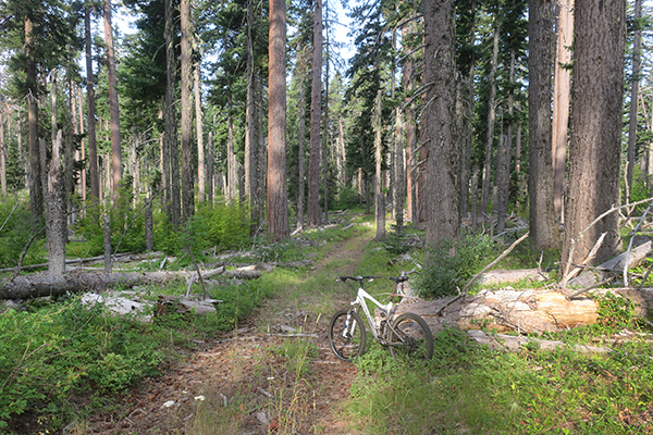 Mountain biking on a Forest Service in the Cascade Mountains