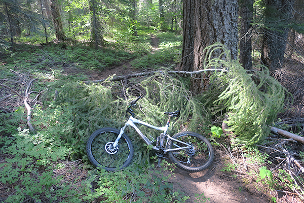 Blown down trees blocking the Cascade Mountain trail