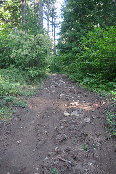Trail damage from recent severe mountain thunderstorm
