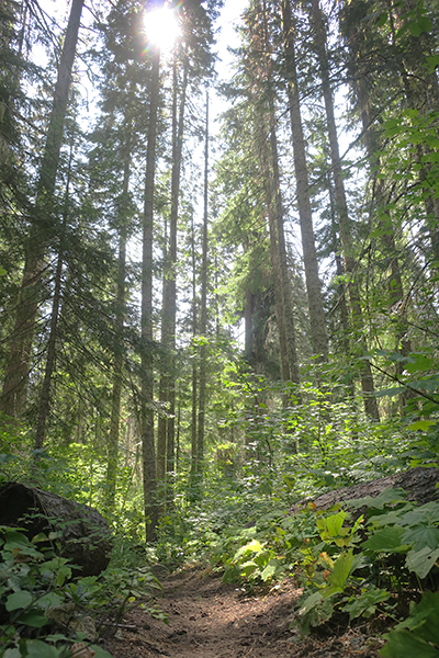 Sunlit Cascade Mountain forest trail