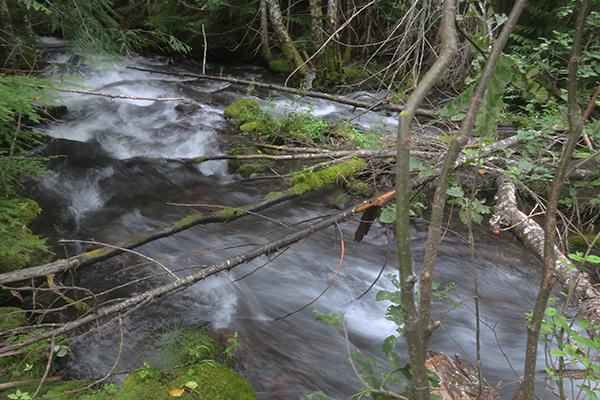 Cascade Mountain creek in central Washington