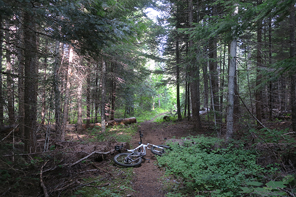 Mountain biking on Cascade mountain singletrack in central Washington