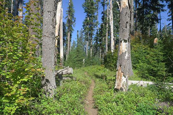 Perfect Cascade Mountain singletrack