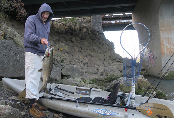 Chinook salmon caught by watermanatwork.com kayak fisherman Ron Barbish on a rough weather day on the Columbia River