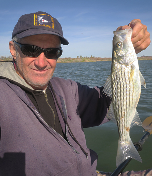 Colorado River striped bass caught by watermanatwork.com kayak fisherman Ron Barbish